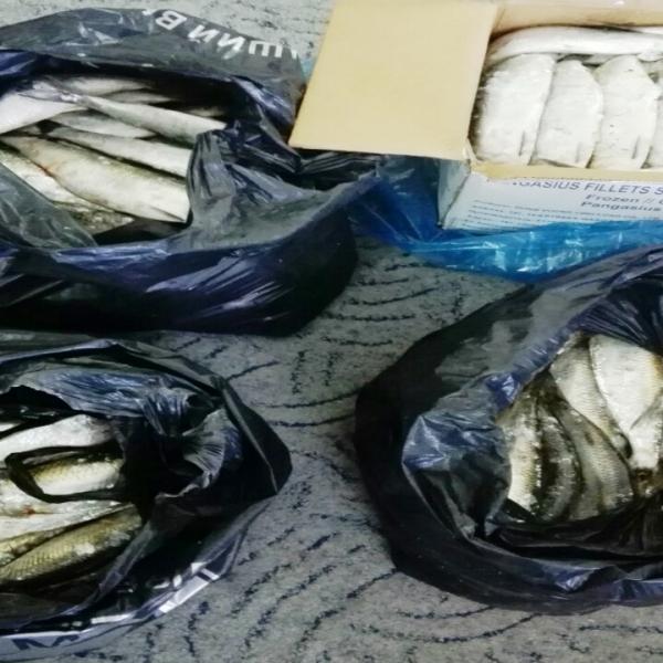35 kg de scrumbie fără documente legale, confiscate de poliţiştii de frontieră gălăţeni