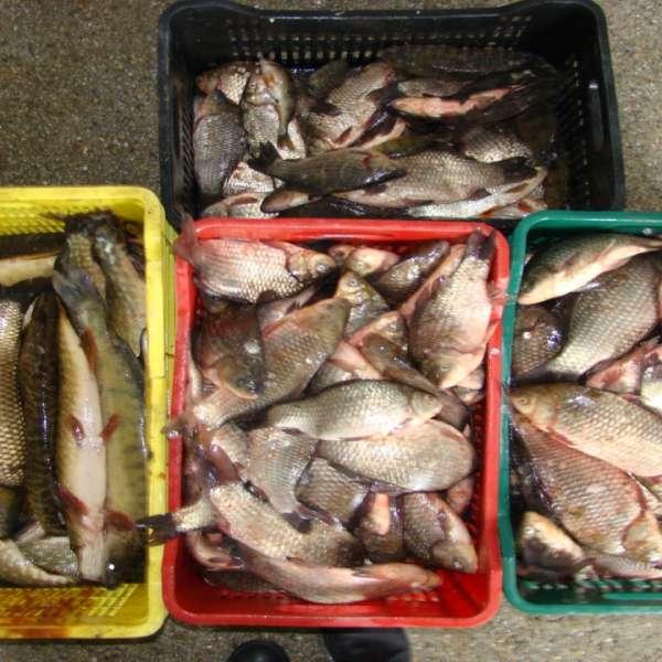 Aproximativ 100 kg peşte fără documente legale, confiscate de poliţiştii de frontieră tulceni