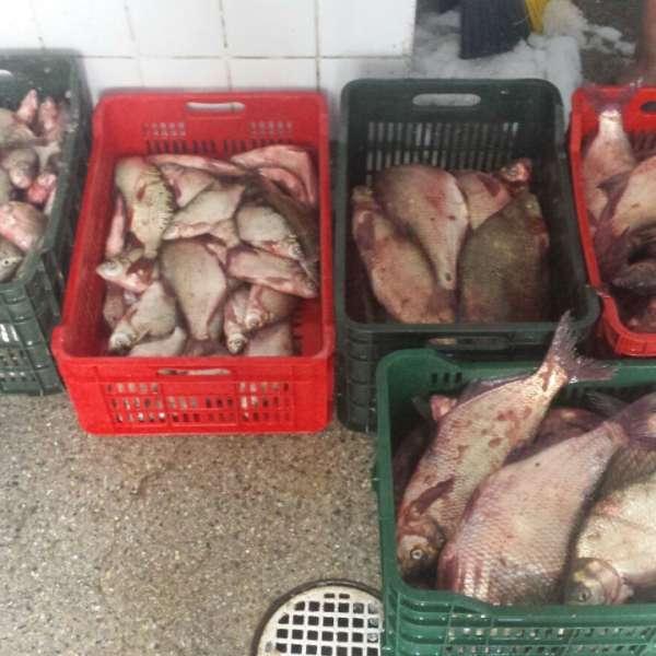 Aproximativ 100 kilograme de peşte fără documente legale, confiscate de poliţiştii de frontieră tulceni
