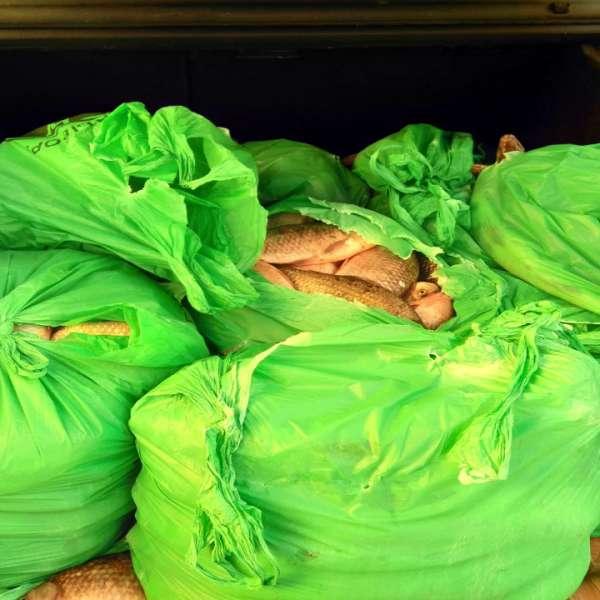 Aproximativ 240 kg de peşte,  transportate fără documente legale