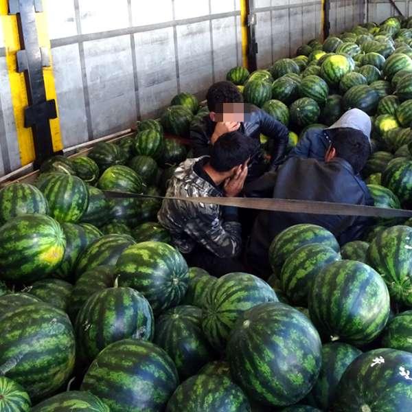 Patru cetăţeni afgani ascunşi într-un camion, printre pepeni, descoperiţi la P.T.F. Calafat