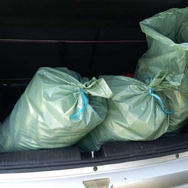Peste 70 kg peşte fără documente legale, confiscate de poliţiştii de frontieră tulceni