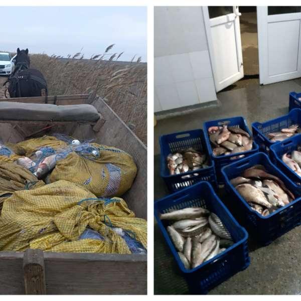 Aproximativ 170 kg peşte fără documente legale şi plase monofilament, confiscate de poliţiştii de frontieră tulceni