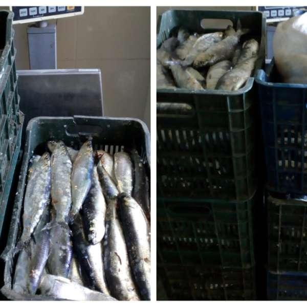 Peste 200 de kilograme de peşte, transportate fără documente legale