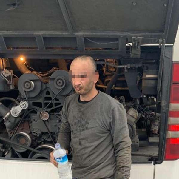 Sirian ascuns sub compartimentul motor al unui autocar, depistat la P.T.F. Giurgiu