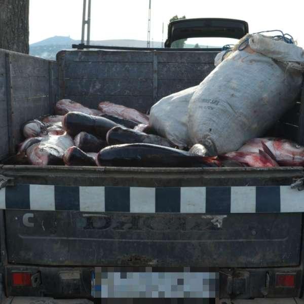 Aproximativ 900 kilograme de peşte şi plase de pescuit, confiscate de poliţiştii de frontieră tulceni
