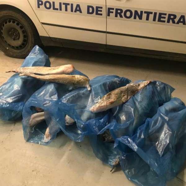 Peşte transportat fără documente legale, confiscat de poliţiştii de frontieră mehedinţeni