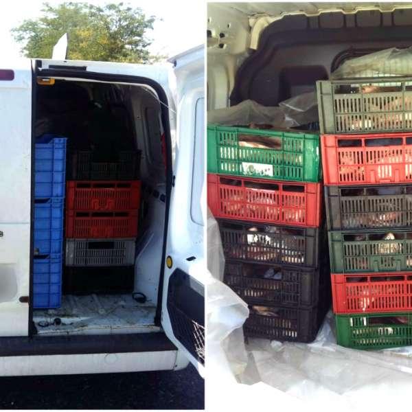 Peste 220 kg de peşte, transportate fără documente legale,confiscate de poliţiştii de frontieră