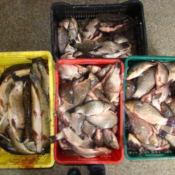 Aproximativ 120 de kilograme de peşte fără documente legale, confiscate de polițiștii de frontieră