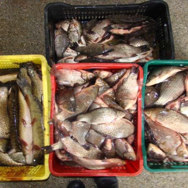 Peste 570 kg peşte, confiscate de poliţiştii de frontieră tulceni