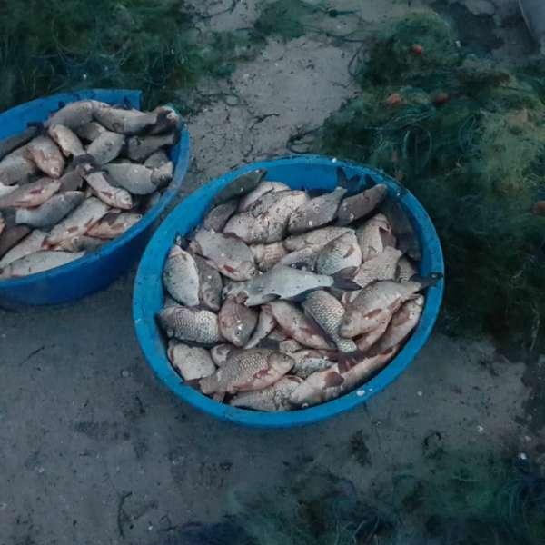 Peste 100 kg peşte și plase monofilament, confiscate de polițiștii de frontieră