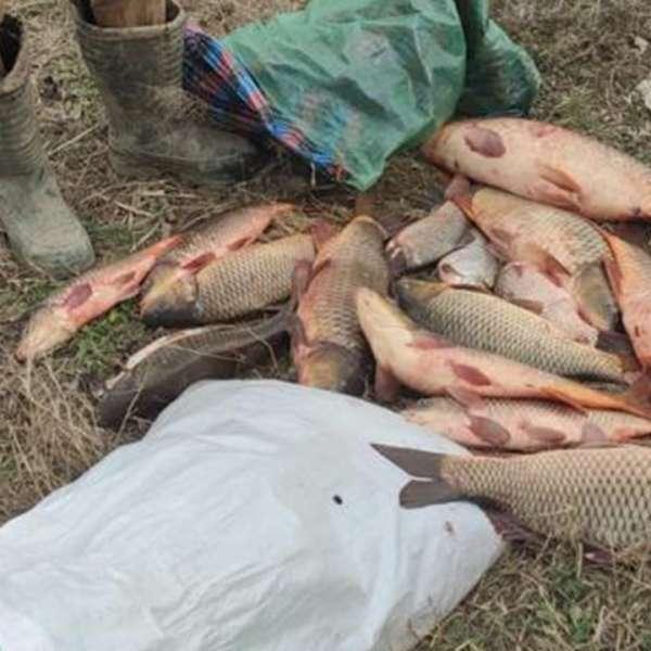 Transport ilegal de pește depistat de polițiștii de frontieră brăileni